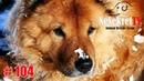 Спасение красивой рыжей собаки Россия город Улан Удэ