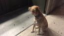 Закрытый зоомагазин чрезвычайно разочаровал пса