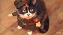 СССP Cat