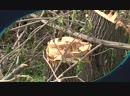Постфактум о создании Народного парка на месте парка Изумрудный