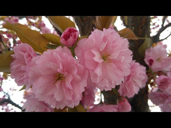 Квіткове різноманіття в Житомирі. Flower variety in Zhytomyr