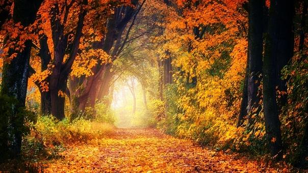 Ноябрьское Драгоценное умение - замечать то, что нравится и восхищаться этим как ребёнок, излучая золотистую волну эйфории. Петь этому оду, хвалебную песнь, отдавая должное. Петь так, как