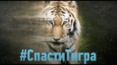 Спасти тигра Discovery Channel