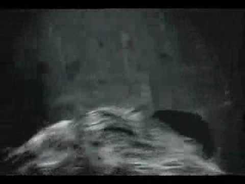 Зелёный Слоник. Маслаев Спят, суки, а я