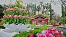 Tulipmania Floral Display 2018