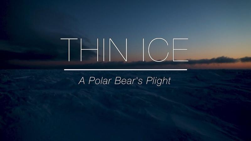 Thin Ice: A Polar Bear's Plight