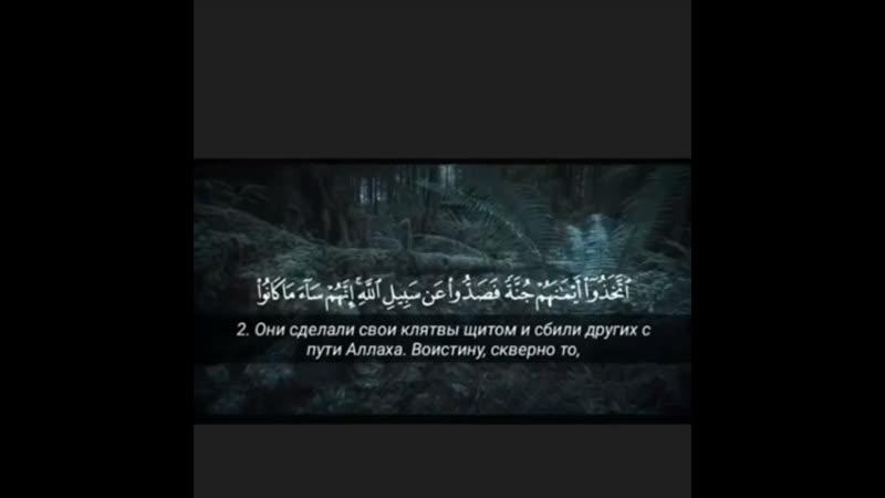 ❤️ Omar Hisham - al-Munafiqun