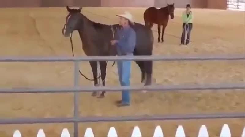 Нападение кота на лошадь)