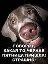 Алла Максимова фото #45