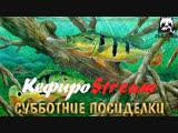 Русская Рыбалка 4 ➤СУББОТНИЕ ПОСИДЕЛКИ #1