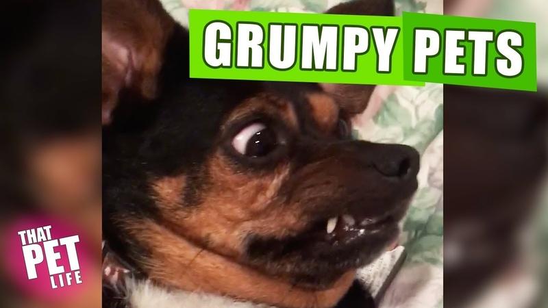 Grumpy Pets 😾🙅🏻♂️ | Funny Animal Compilation