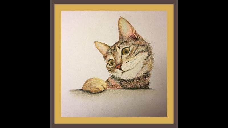 Кот пастельными карандашами Cat in pastel Painting on Pastel pencils