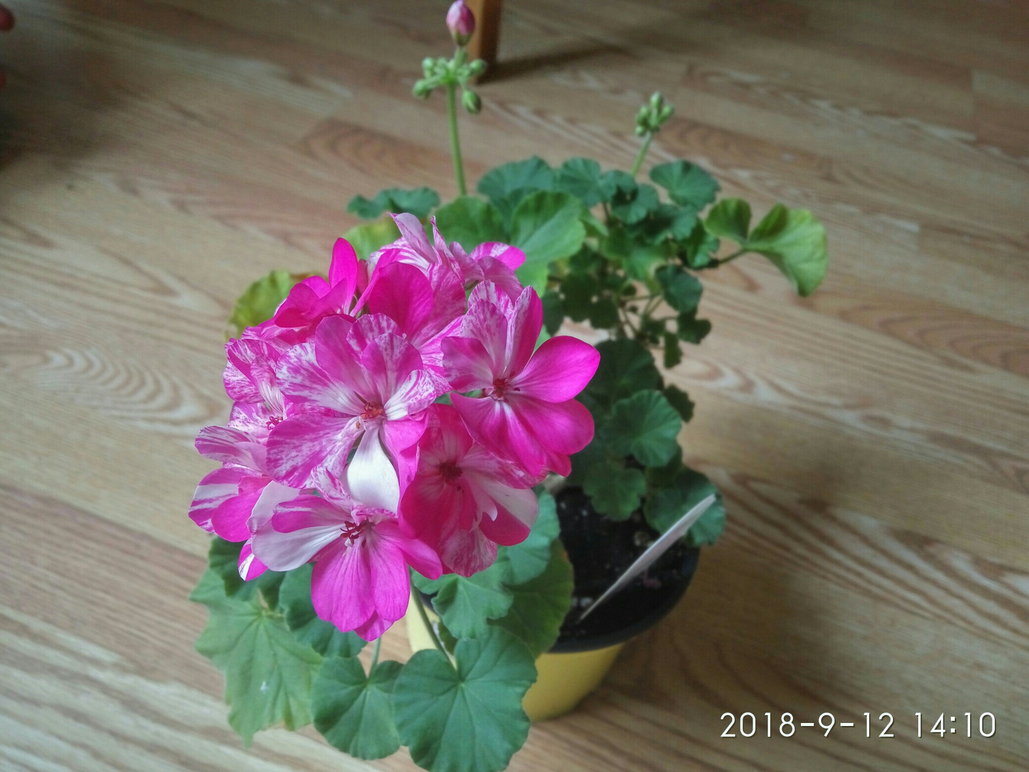 "Мои цветочки ... Занятие для души)))""  - Страница 2 OmZ749lwgGU"