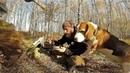 Поход В Лес За Грибами В Октябре Картошечка с Белыми Грибами В Лесу Просто Шедевр