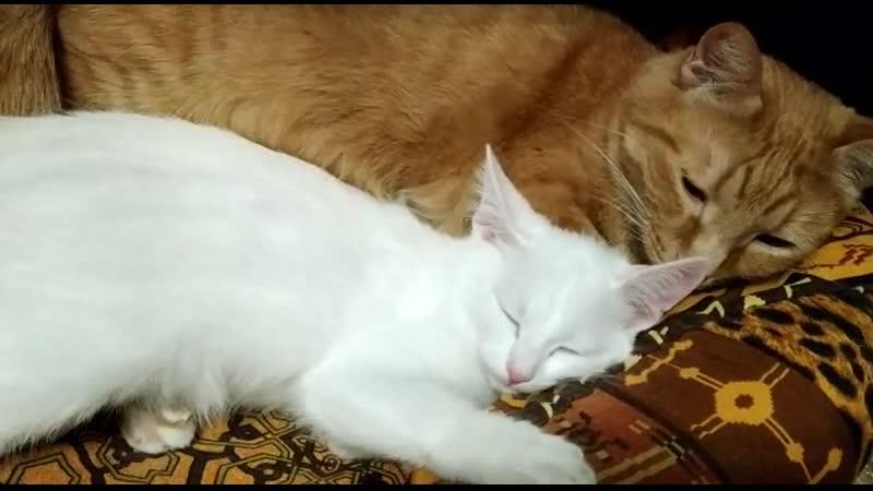 Ричик сразу понял кто из котят нуждается в бОльшей опеке Какой он хороший