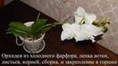 Орхидея из холодного фарфора лепка бутонов листьев корней сборка ветки и закрепление в горшке