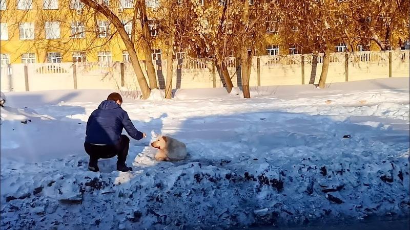 Собака ждала помощи Мы приехали и не смогли уехать без собаки The story of the dog rescue