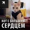 """Комсомольская правда on Instagram: """"Этот котик родился с сердцем наружу. Никто не верил, что он выживет. Но благодаря любви и заботе несчастный мал..."""