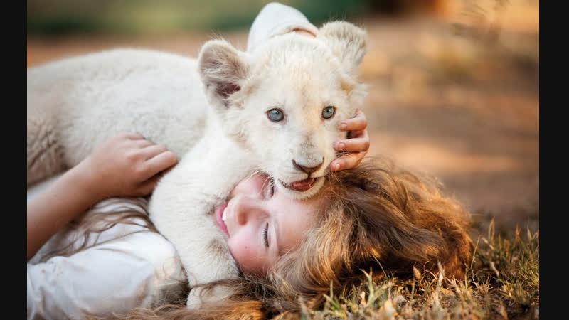 Девочка Миа и белый лев Mia et le lion blanc 2018 трейлер русский язык HD Жиль де Мэтр