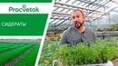 Сидераты. Органическое удобрение для экологически чистых урожаев!