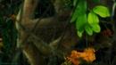 Дикая Бразилия 1 Жемчужины джунглей Документальный природа животные 2014