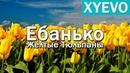 Ебанько - Желтые тюльпаны