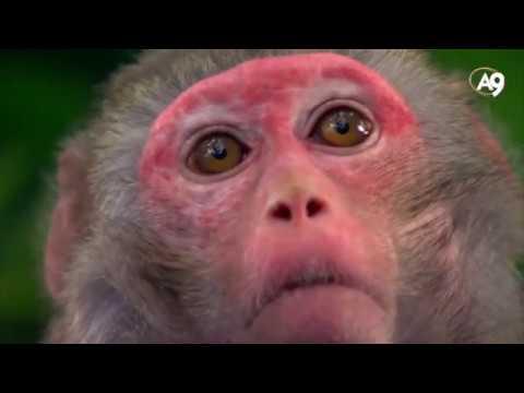 Evrim Teorisinin Çöküşü 2 A9 TV HD Belgeseli