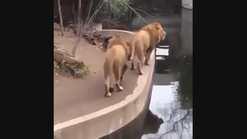 What's that thing over thereeeeeeeeee....