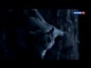 25.08.2018 0155мск_25.08.2018 1240мск Жизнь в воздухе.Документальный сериал (Великобритания).Силе притяжения вопреки
