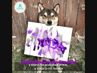 Пёс-художник | АКУЛА