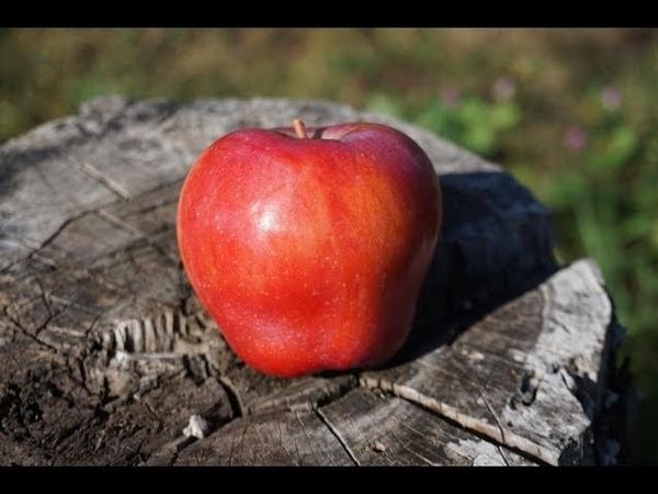 Осенние сорта яблони - красивые, вкусные, зимостойкие