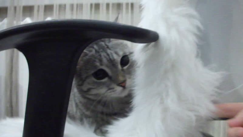игра с *кошкой*Минервой