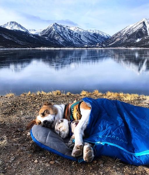 Генри и Балу: неразлучные пес и кот, которые вместе со своими хозяевами путешествуют по Америке и не представляют жизни друг без друга.