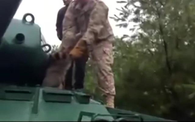 Прекратите швырять енотов! - Stop it terror!