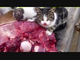 Brutal Death Metal Cats