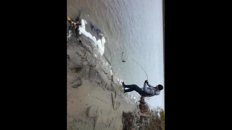 Приехал на берег Иртыша Поймал рыбу моей мечты😃😁🎣🎣🎣