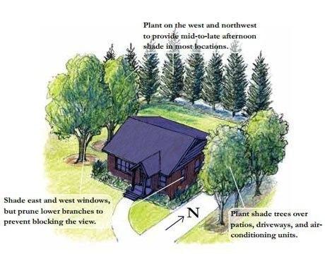 Правильное расположение деревьев снижает расходы на отопление на 30%