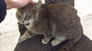The cat meows very loudly because does not want to eat food