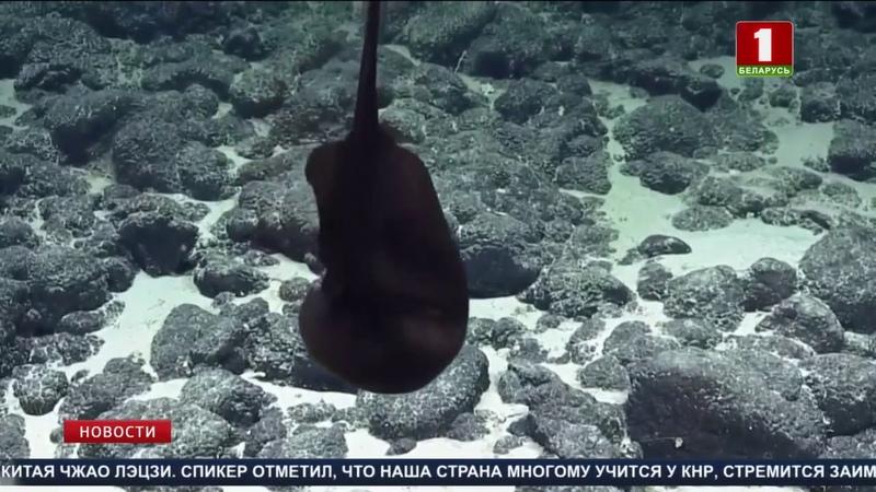 Морские исследователи запечатлели на видео морского угря большерота