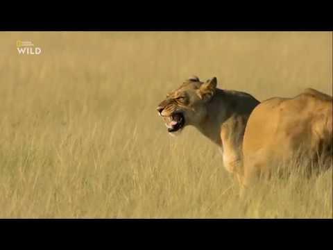 Nat Geo Wild Смертоносная Африка. Калахари 2018