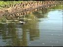 Fisherman Vs Crocodile Yellow Water NT