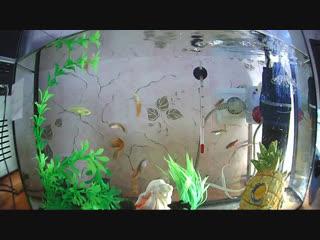 Рыбки у Маши