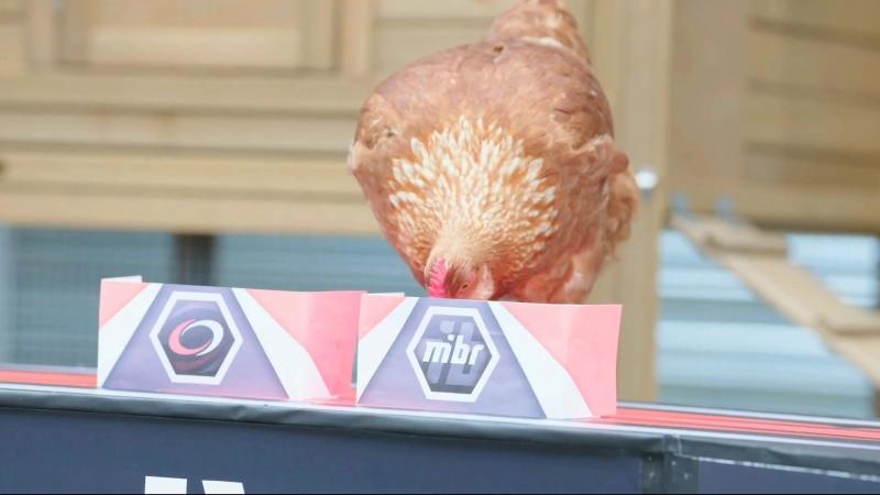 Еще один прогноз курицы