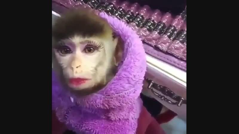 Иэ любой обезьяны