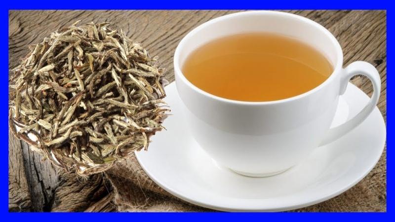 Té Blanco Para que Sirve - Efectos secundarios y Contraindicaciones del té blanco