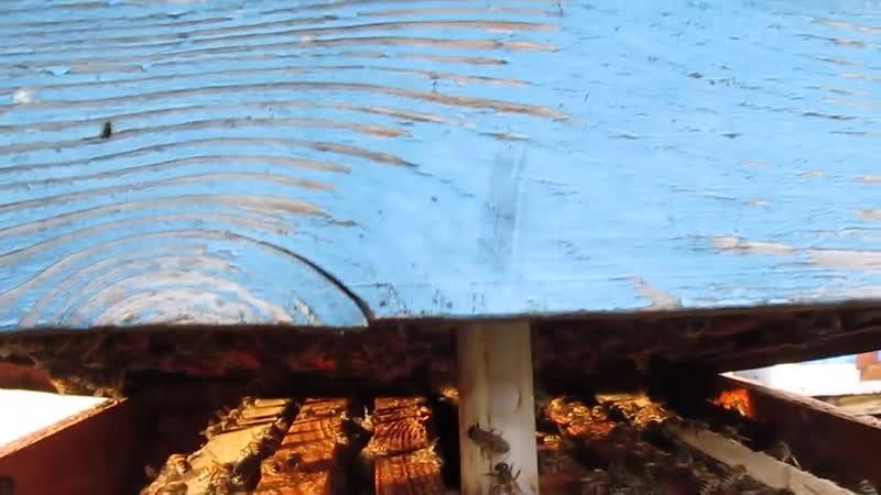 Готовность семей к зимовке 2019 пчеловодом и сохранность плодных маток