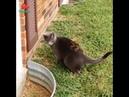 Приколы про кошек котов Смотреть до конца 2018