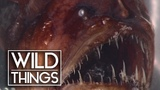 Ocean Weirdos Unusual Creatures Of The Sea Documentary Wild Things