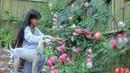 笋 Best Time of Year to Comsume Juicy and Tender Bamboo Shoots Pick As Much As You Like Liziqi