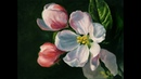 Яблоневый цвет, холст 30x40, масло